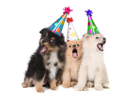 puppies happy birthday puppies singing happy birthday wearing hats photograph by brown