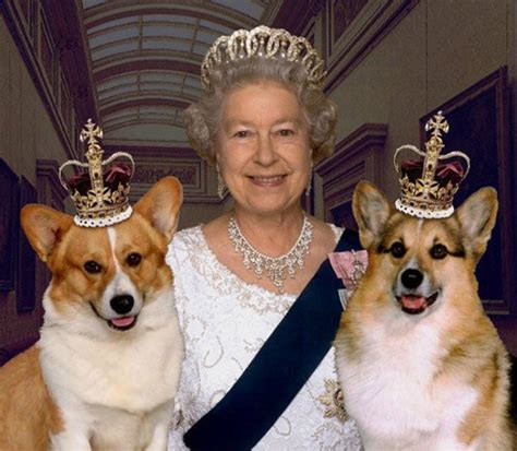 Queen Corgis | saved by dogs herding dogs pembroke and cardigan welsh