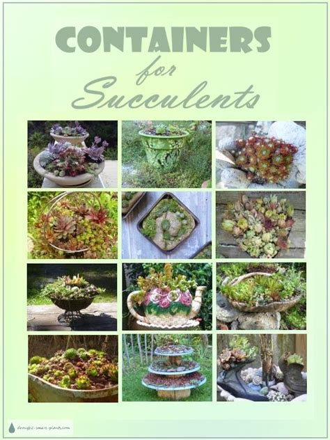 succulent containers for sale containers for succulents rustic classic rugged funky