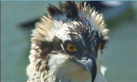 bird cam explore