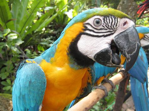 blue and gold macaw by james fong on deviantart