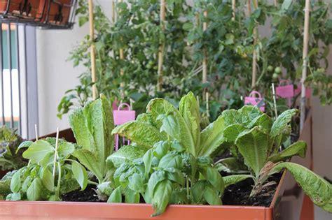 orto sul terrazzo di casa tavolo da orto sul balcone giugno erbaviola