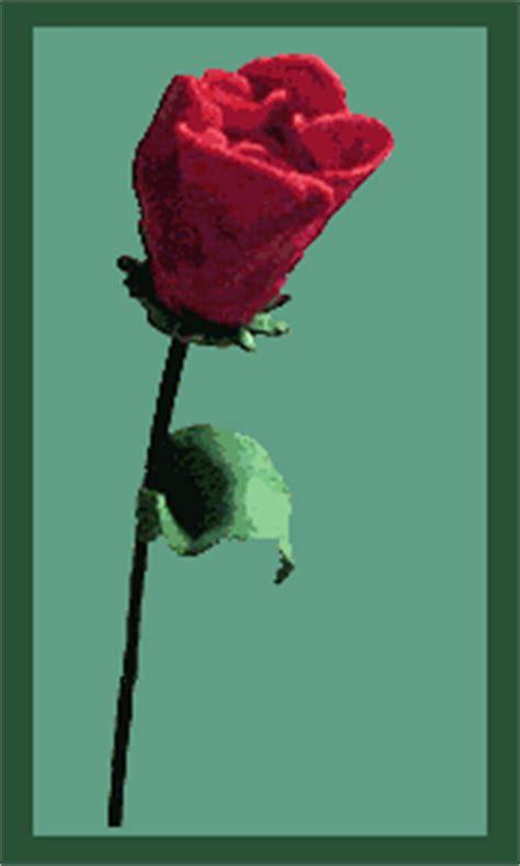 wallpaper bunga gif rosas im 225 genes animadas gifs y animaciones 161 100 gratis