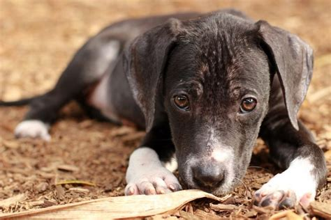 how to fatten up a puppy how to fatten up a step by step diy expert s advice