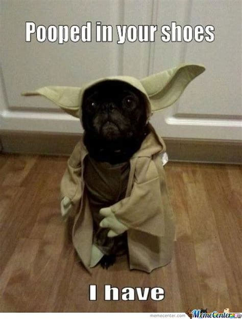 yoda dog memes  collection  funny yoda dog pictures