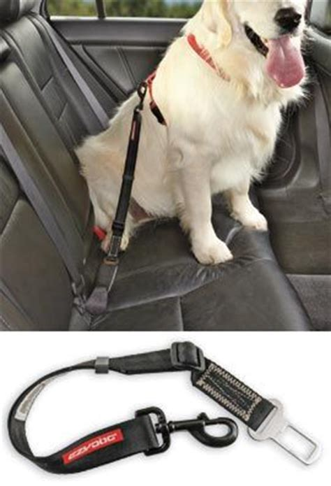 Car Safety Belt For Pet Intl best 25 seat belt buckle ideas that you will like on