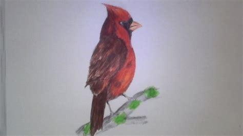 como dibujar un pajaro como dibujar una ave cardenal a lapicero youtube