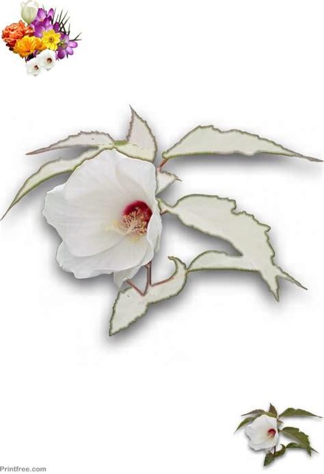 FlowerColoring05