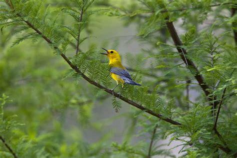 houston area provides an oasis for birds houston chronicle