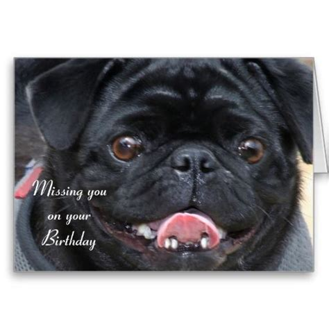 black pug cards 17 best images about pug birthday ideas on pug shirt trucker hats and