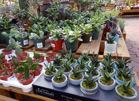 Les Plantes Succulentes by Plantes Grasses Succulentes Jardin Dion