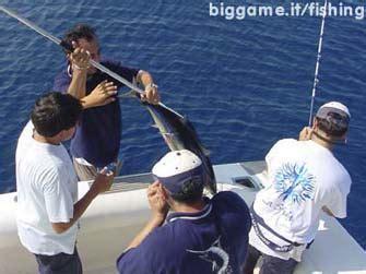 biggame it la pesca sportiva in mare pesci e tecniche di biggame it la pesca sportiva in mare pesca a traina