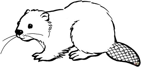 coloring pages of canadian animals north american beaver coloring page free printable
