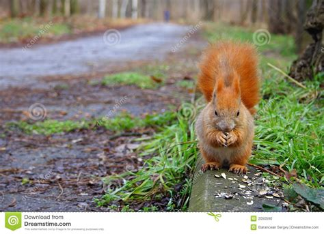 snacks for squirrel stock photo image 2050590
