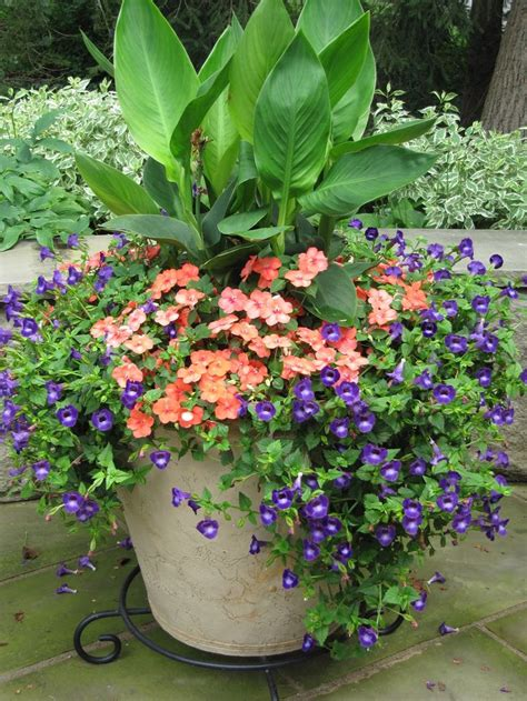 362 best images about outdoor potted plants on pinterest window boxes container plants and