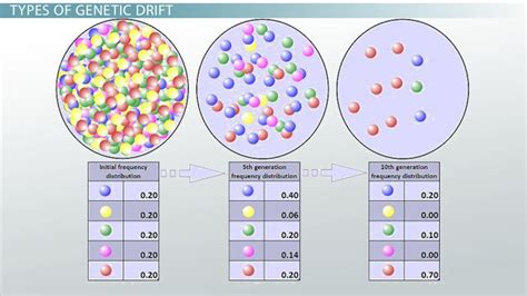genetic drift definition exles types video