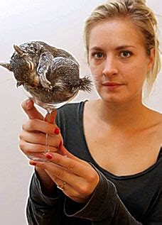 polly taxidermy taxidermy with a twist artist takes dead animals