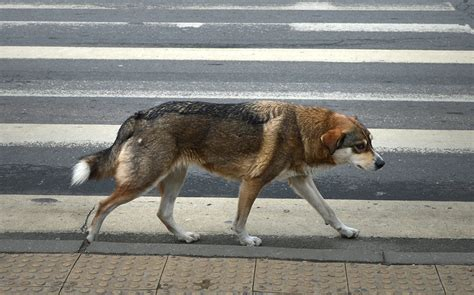 when are dogs no longer puppies owners no longer traced when pet is killed on road