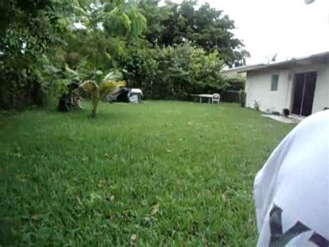 how to catch a lizard in your backyard catching lizards in the backyard youtube