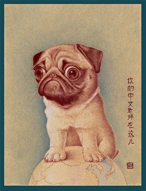 are pugs from china 17 best images about pug on behance pug and pet portraits