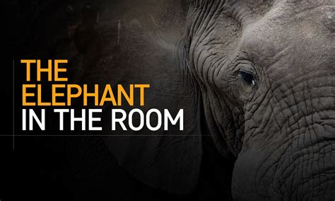 an elephant in the room wccftech community time bench a thon results