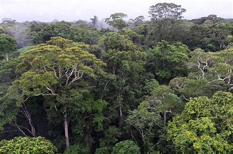 canopy amazon protecting the brazilian amazon the nature conservancy
