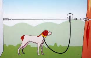 Cable for dog run submited images
