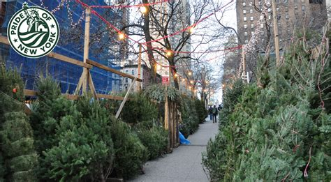 farm fresh christmas trees grown in new york state farm