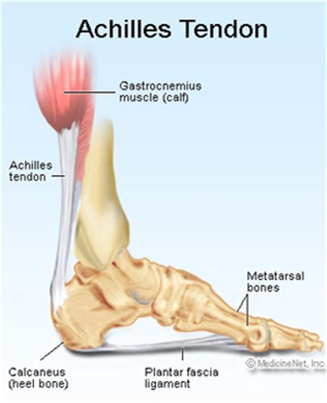 Planters Fasciitis Symptoms by Plantar Fasciitis Singapore Sports And Orthopaedic Clinic