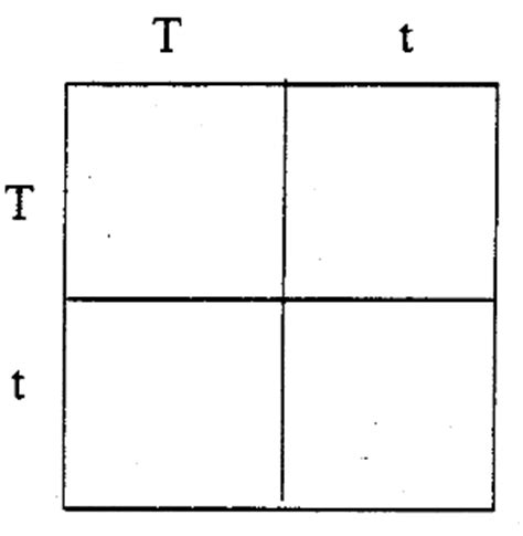 Punnett Square Template by Blank Punnett Square Template Related Keywords Blank