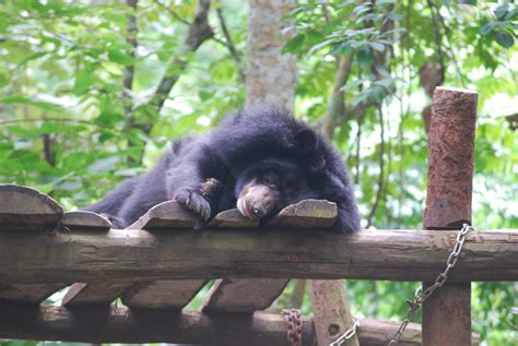 luang prabang bear rescue welcome to ersand s travel blog