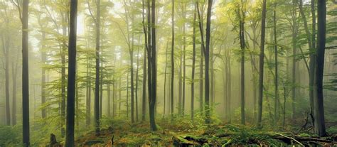 nature landscape green forest mist morning daylight