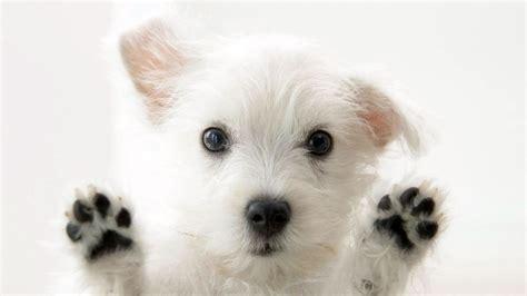 dogs for homes wallpaper for home wallpapersafari