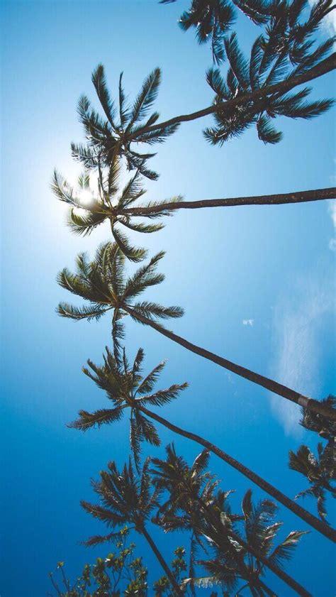 tree wallpaper pinterest palm tree iphone wallpaper wallpapersafari