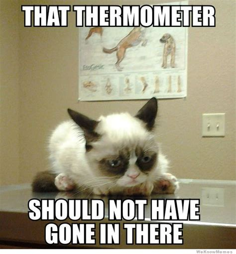 Best Of Grumpy Cat Meme - grumpy cat goes to the vet weknowmemes