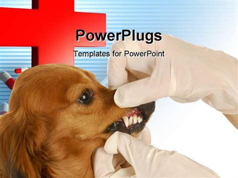powerpoint templates for veterinarians dachshund getting teeth examined by veterinarian on white