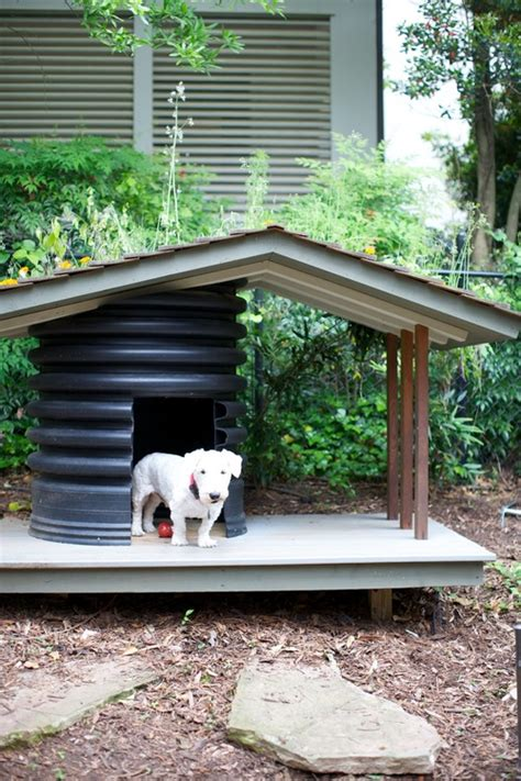 backyard ideas for dogs 8 backyard ideas to delight your dog orvis news