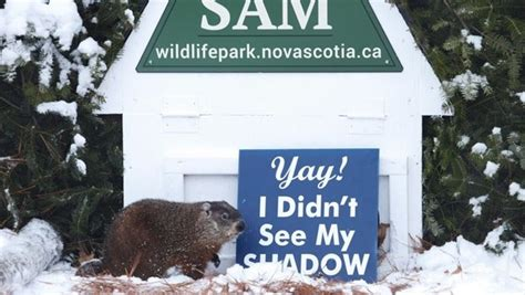 groundhog day in canada it s groundhog day in canada
