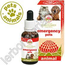 fiori australiani emergency australian bush flower essences animal emergency pets