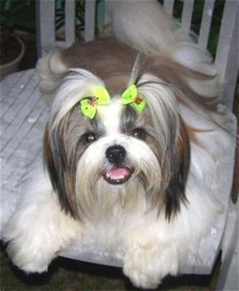 Jual Alat Cukur Bulu Anjing гипоаллергенные собаки