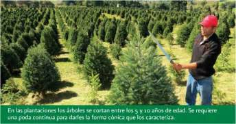 forestry geo mexico the geography of mexico