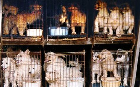 what is a backyard breeder responsible breeders vs puppy mills backyard breeders