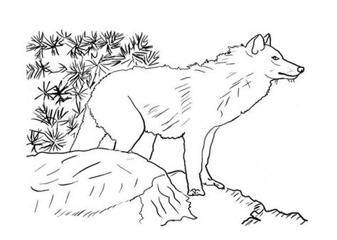 Realistic Wolves Colouring Pages Realistic Wolf Coloring Pages
