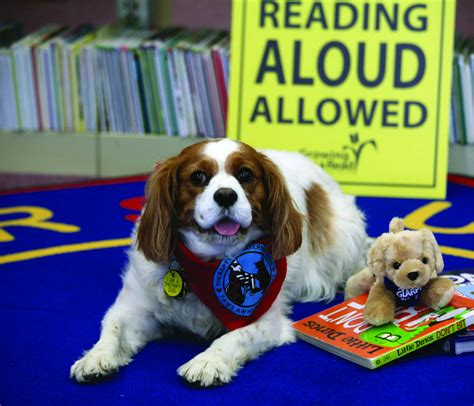 how to a therapy how reading aloud to therapy dogs can help struggling mindshift kqed news