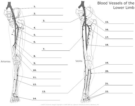 blood vessels coloring pages vessel coloring pages printable vessel best free