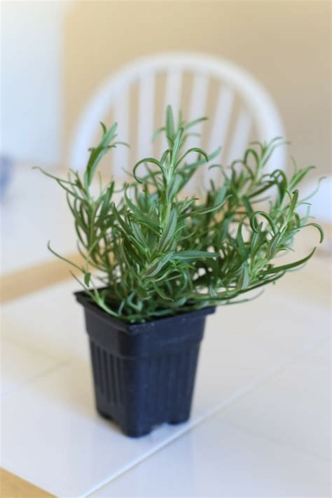 schlafzimmer pflanzen schlafzimmer pflanzen 100 images sind zimmerpflanzen