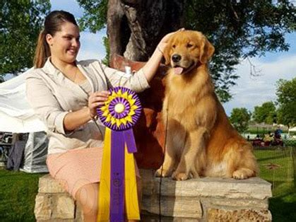 golden retriever national specialty 2016 mile hi golden retriever club thursday august 18 2016