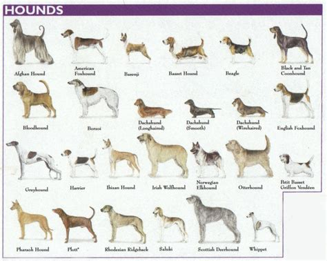 types of dogs the 7 dog breed groups explained hound breeds warm