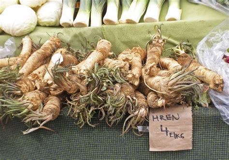 rafano in cucina rafano coltivazione e usi della radice piccante cure