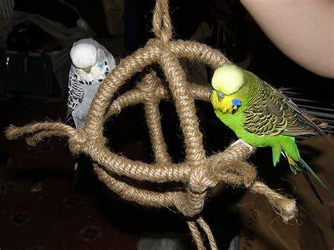 budgie swing diy budgie swing idea pets pinterest swings digital